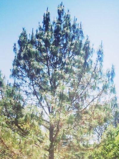Sun burn Treetop Plant Life Woods