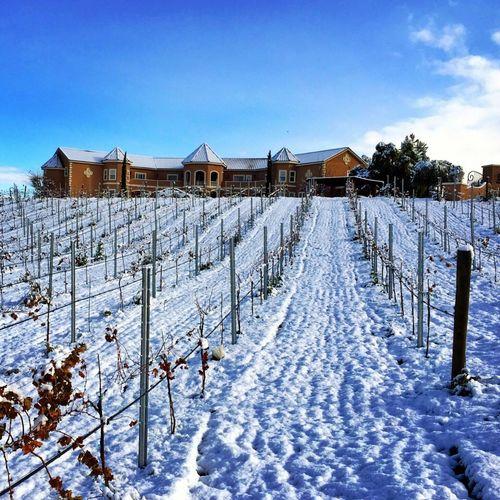 Temecula Winecountry Snow ❄ IPSAngle IPSSquare IPSWinter IPSLandscape IPSThirds IPSLeadingLines Rule Of Thirds