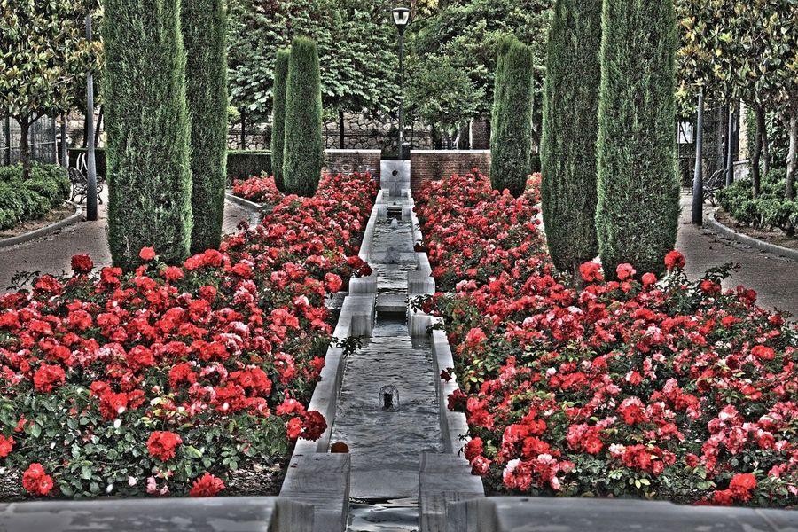 Hdrphotography Natural Flores Popular Photos