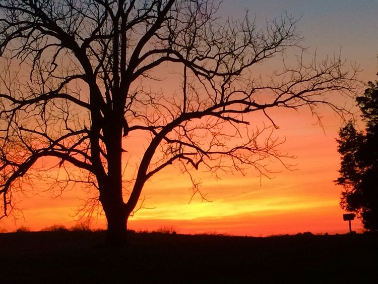 Silhouette Sunset Branch Tree Bare Tree Scenics Tranquil Scene Beauty In Nature Tranquility Orange Color Landscape Nature Tree Trunk Dark Sky Outdoors Growth Multi Colored Outline Vibrant Color Kewanee Illinois
