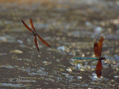 Dragonfly seen in waterfall 滝壺で見たトンボ Tadaa Community Dragonfly Insect トンボ 昆虫