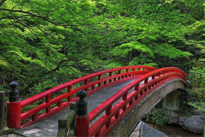 -Red Gate- Tree Red Green Color Connection Nature Bridge - Man Made Structure Beauty In Nature Adventure Nature Canonphotography Canon5Dmk3 Japan Travel Landscape_photography Landscape_Collection Sigma 35mm Art Seto