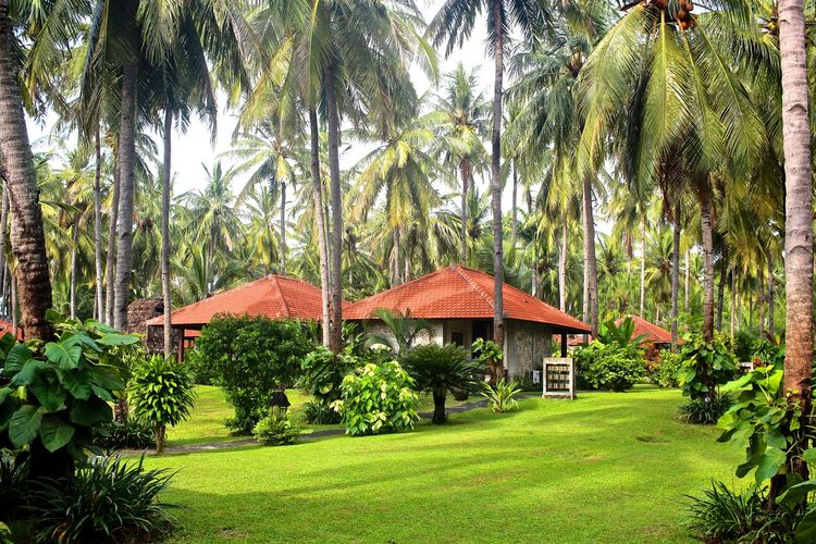 Ketapangindah Architecture Beauty In Nature Day Green Color Growth Nature Outdoors Palm Tree Sky Tranquility Tree