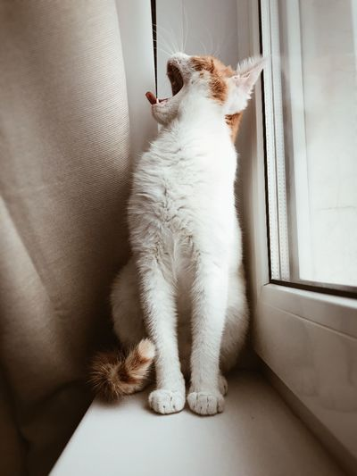 Cat sitting on window at home
