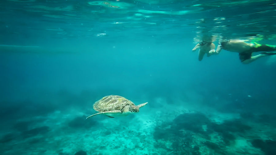 People with turtle swimming in sea
