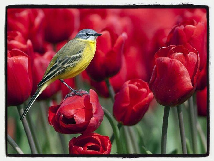 Birds Presidenteprudente Brasil Nature
