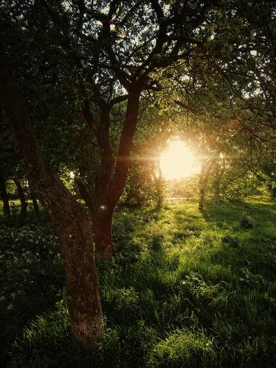 spring wonderland. EyeEm Best Edits Landscape EyeEm Best Shots EyeEm Best Shots - Nature Beauty In Nature Nature Green Tree Branch Shadow Forest Sunlight Sunbeam Sky Shining Sunset Sun Growing Calm