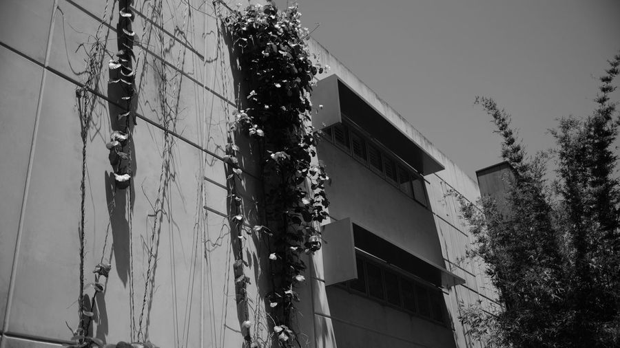 Architecture Black & White Black And White Blackandwhite Building Exterior Built Structure City Clear Sky Day Growth Low Angle View Monochrome Nature No People Outdoors Sky Skyscraper Tree Vine