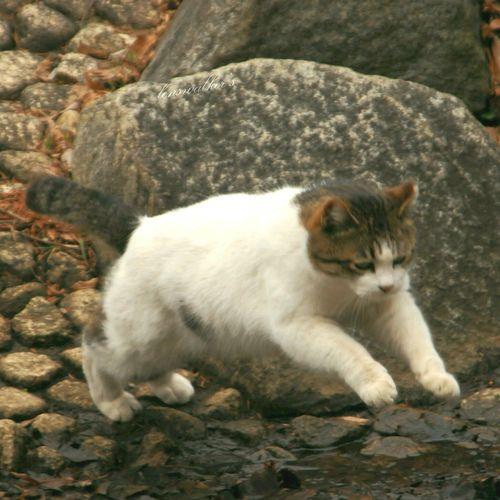 僕らの居場所は言わにゃいで のらねこ部 キジシロ シロキジ Playing With The Animals EyeEm Best Shots Eye4photography  ファインダー越しの私の世界 ファインダーは私のキャンパス Cat♡ 自由猫 野良猫ウォッチング 地域猫