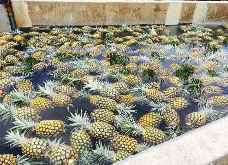 Pineapples Galore Water Healthy Fresh Fruits Fresh Food Yellow Pineapples Pineapple Agriculture High Angle View Outdoors Day Market Nature Freshness Flower Food No People Growth