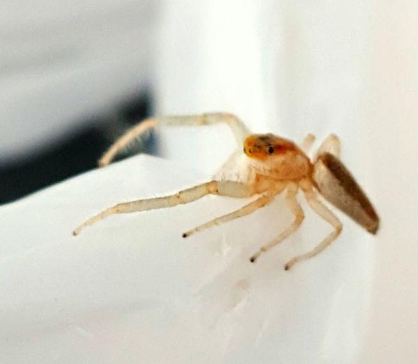My new little friend . Spider Spider Nature_collection Eyenaturelover Spider Series Spider Friend.