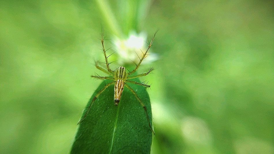 Tales of the green, my tiny friend. Insect Animal Themes Close-up Green Color Animals In The Wild Nature Animal Wildlife Beauty In Nature