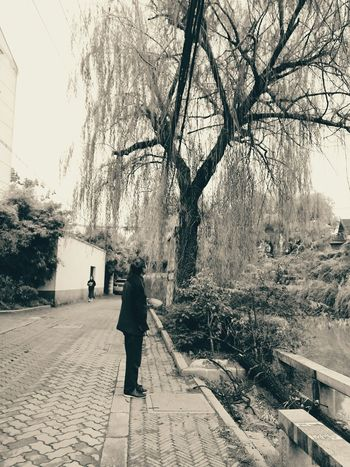 Lookingup Streetphotography Life Tree River Noon Enjoying Life Taking Photos Hanging Out Willow