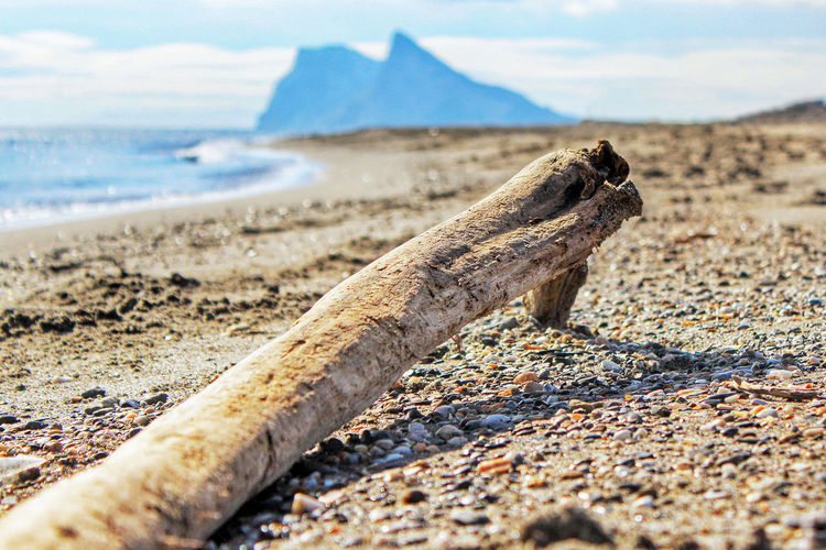 Close-up of driftwood on sand at beach against sky