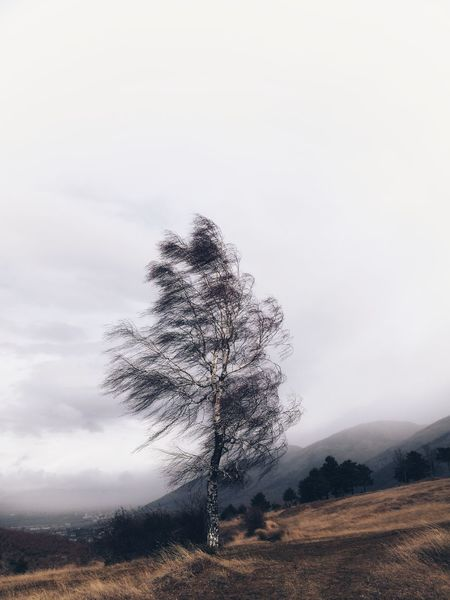 Somewhere in my town EyeEmNewHere Mountain Landscape Cloud - Sky Outdoors Nature Pinaceae No People Beauty In Nature Sky Tree Close-up Day Go Higher