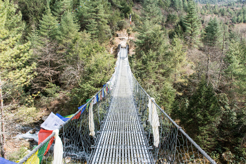 Lost In The Landscape Beauty In Nature Bridge - Man Made Structure Footbridge Forest Nature Outdoors Rope Bridge The Way Forward