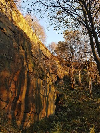 Tree Nature Beauty In Nature Outdoors Growth Day Low Angle View No People Sky Weathered Rough Autumn Hell Hole Climbing Quarry Beauty In Nature Landscape Hell Hole Rocks Heptonstall Sunset Nature Textures And Surfaces Light And Shadow Rocks Stone