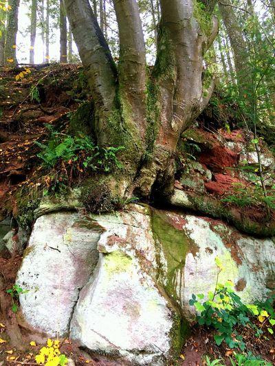 Rheinland-Pfalz  Nature Wood