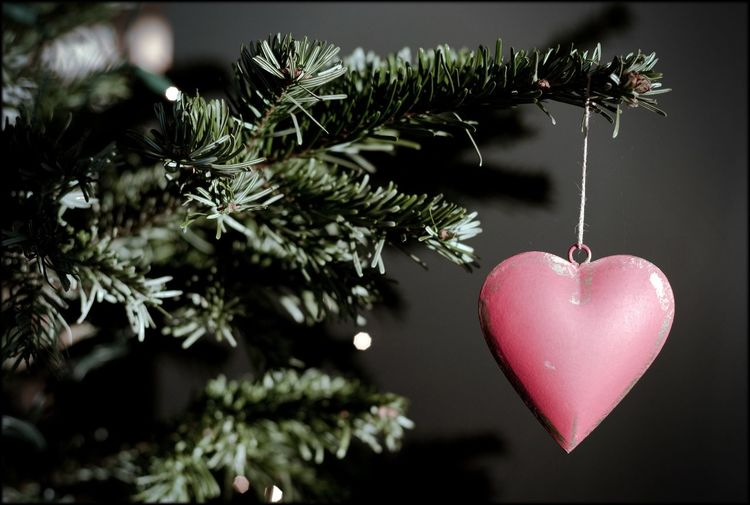 Heart shape ornament hanging from christmas tree