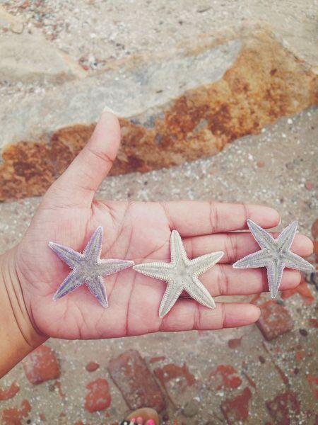 Three's company. Starfish  Beach VSCO