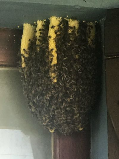 Honeycomb in My house Outdoors Bees Honeycomb No People Close-up Freshness Day