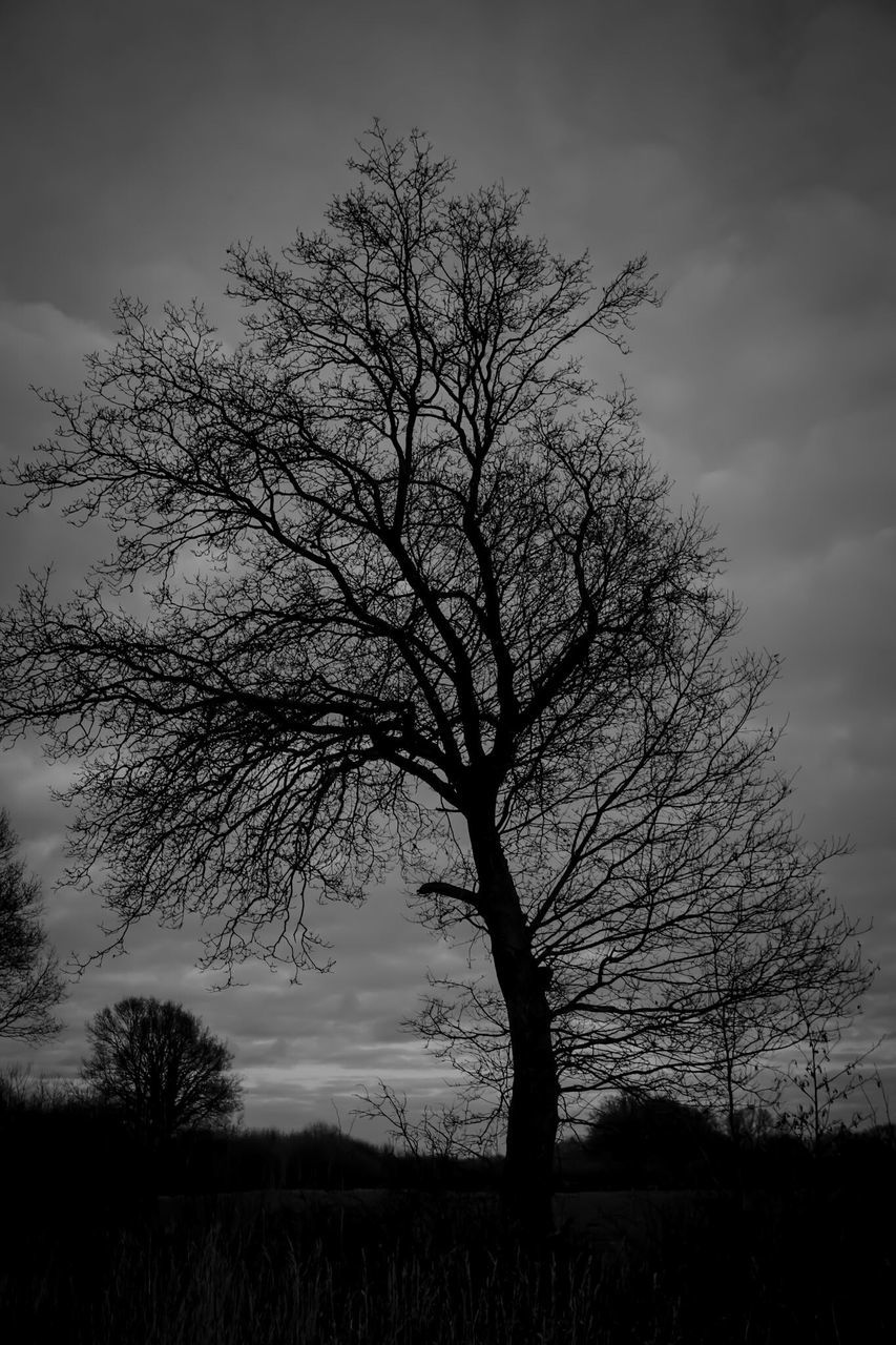 tree, bare tree, tranquility, beauty in nature, lone, branch, sky, nature, landscape, tranquil scene, scenics, silhouette, outdoors, no people, sunset, day