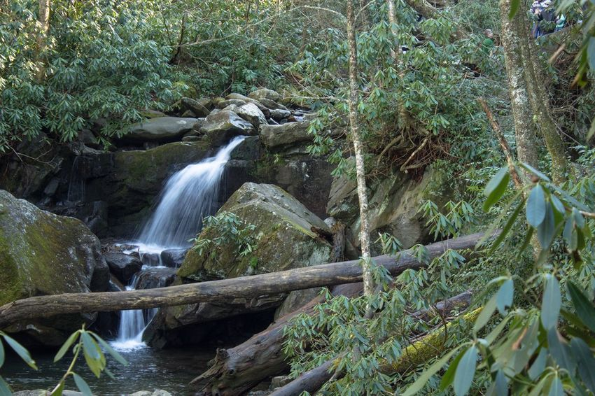 Grotto Falls, Smoky Mountains Waterfall Water Nature Tree Beauty In Nature No People Green Color Plant Outdoors Forest Scenics Day Travel Destinations Beauty Freshness Smoky Mountains Tennessee GrottoFalls
