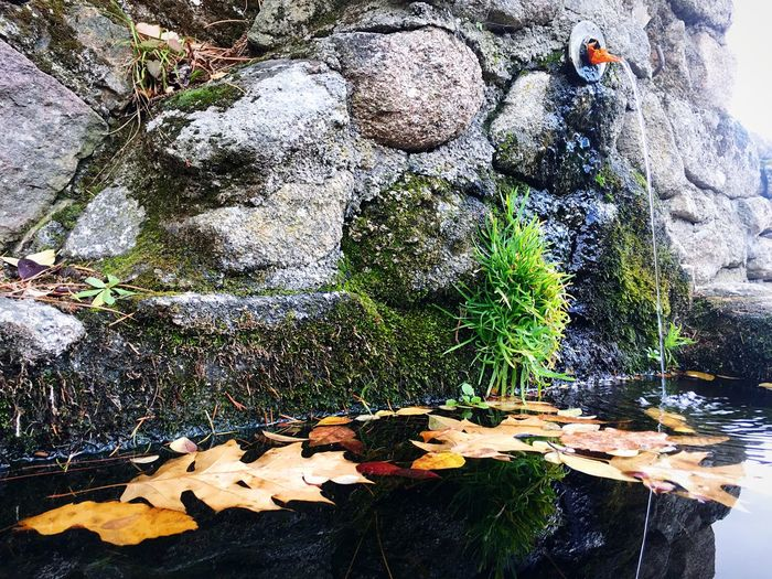 water springs Brown Natural Fountain Green Color Green Winter Wildlife Wilderness Freshwater Freshness Fountain Rock - Object Leaf Autumn Nature High Angle View Outdoors Day Beauty In Nature No People Freshness Close-up Water