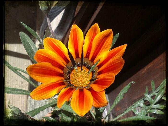 I fiori di papá ❤ First Eyeem Photo