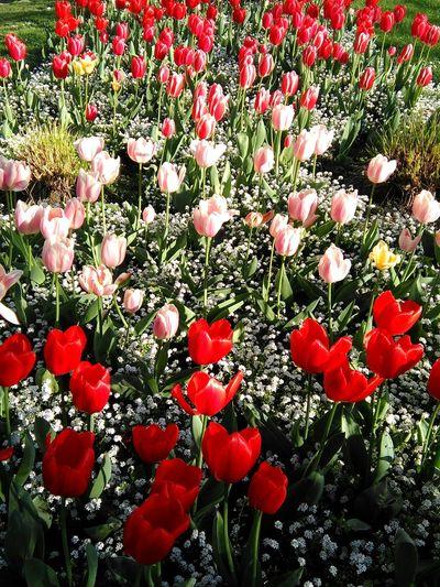 Flowers In Park Belgium Colors Charleroi, Belgium Colorful Belgium. Belgique. Belgie. Belgien. Etc.