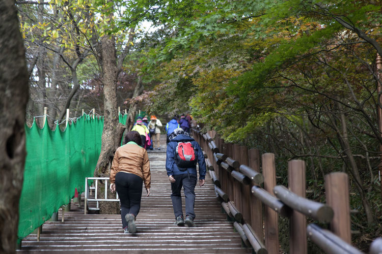 autumn in Maisan Mountain, Muan, Jeonbuk, South Korea Adult Autumn Beauty In Nature Day Fall Footbridge Full Length Group Of People Leisure Activity Maisan Men Mountain Nature Outdoors People Railing Real People Rear View Togetherness Tree Walking Women Young Adult Young Women