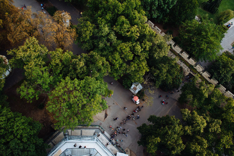 High angle view of trees in city