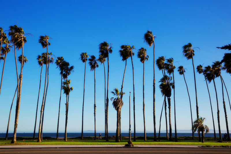 Beauty In Nature Blue Sky Clear Sky Day Low Angle View Nature Outdoors Palm Leaves Palm Trees Plant Sky Tranquility