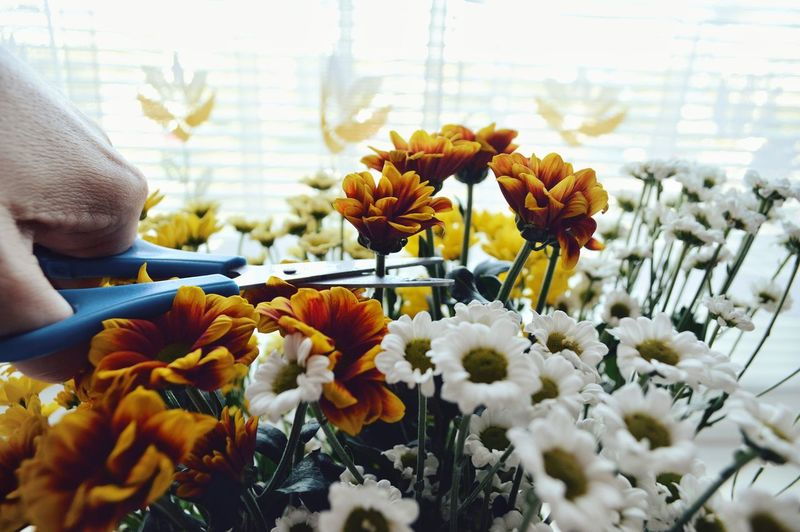 Cropped Hand Cutting Flower Heads