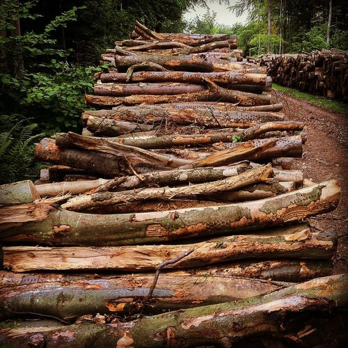 New Forest, Hampshire. UK United Kingdom Beauty In Nature Day Deforestation Environmental Issues Forestry Industry Large Group Of Objects Log Lumber Industry Nature No People Outdoors Pile Stack Timber Tree Tree Ring Tree Stump Tree Trunk Wood - Material Woodpile