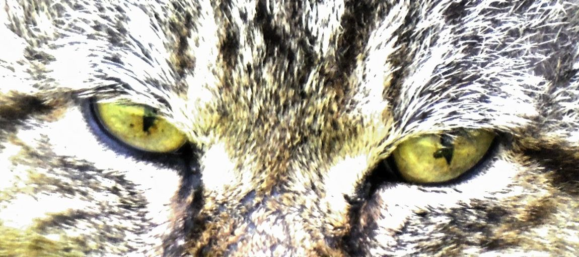 First Eyeem Photo Your Design Story Close-up Selective Focus Extreme Close-up Animal Eye In Wentzville Missouri Animal Head