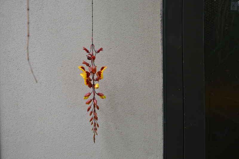 hanging red yellow flower Wall - Building Feature No People Close-up Flower Plant Flowering Plant Plant Part Leaf Built Structure Day Nature Vulnerability  Fragility Architecture Red Indoors  Hanging