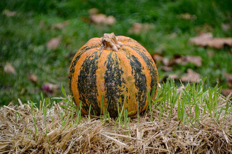 Close-up of pumpkin on field