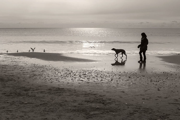 Dog walker at Alum Chine, Bournemouth this morning. Dorset Beach Photography Fujifilm Black & White Dog Walking
