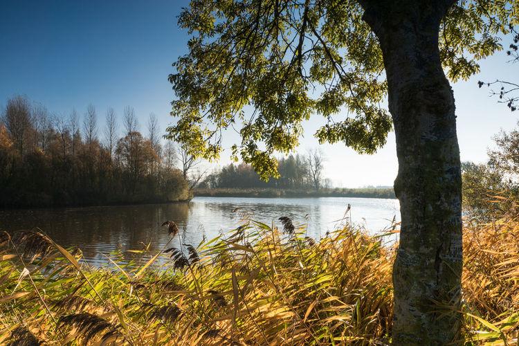 Stierskreek, Heile EyeEm Market © Water Tranquility Tree Tranquil Scene Creek Autumn Morning Light Zeeuws Vlaanderen Zeeland  The Netherlands Sony A77ii
