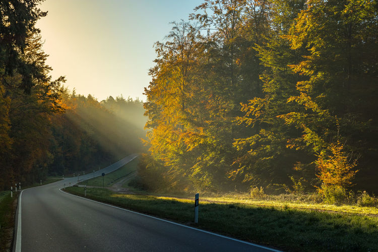 Tree Plant Road Autumn Nature Sky Beauty In Nature No People Direction Growth The Way Forward Tranquility Day Non-urban Scene Country Road Scenics - Nature Country Outdoors Autumn Morning Morning Light Sunbeam Sunrise Sinlight