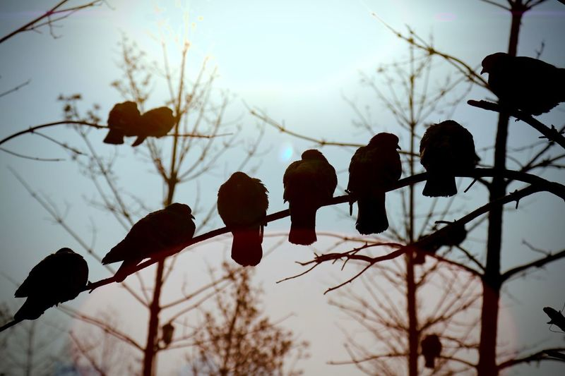 Silhouette Birds Perching On Twigs Against Sky