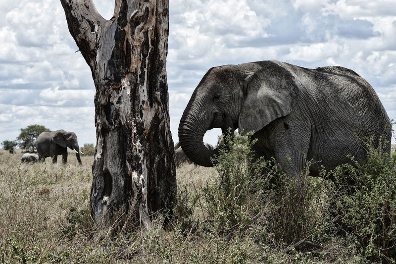 View of elephant on field against sky