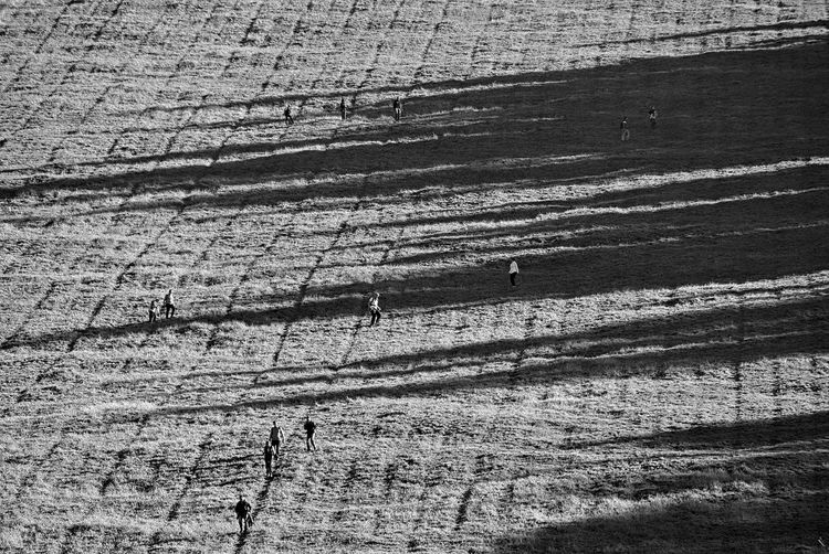 Long Shadows Pattern, Texture, Shape And Form Patterns In Nature Agriculture Backgrounds Beauty In Nature Day Environment Field Full Frame High Angle View Land Landscape Nature No People Outdoors Pattern Patterns People Plant Scattered Sunlight Textured  Tranquility Tree