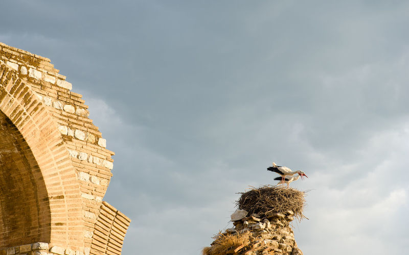 Low angle view of storks in nest against cloudy sky