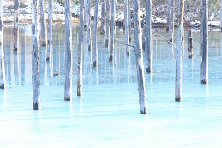 Blue Nature Beauty In Nature Tree Winter Hokkaido Biei EOS 6D