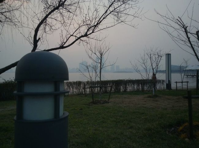 Tree Bare Tree No People Sky Grass Outdoors Nature Branch Day Lamp Lamp Post Lamp Design Lamp
