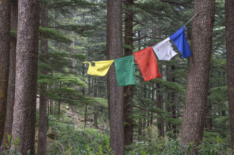 Flag Hanging Nature No People Outdoors Tibetan Prayer Flags Tranquility Tree Tree Trunk