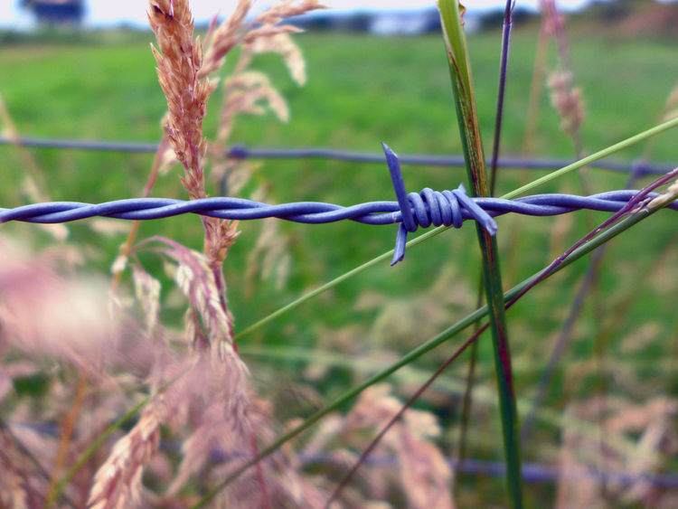 Barbed Wire Close-up Fence Focus On Foreground Grassy Growth Plant Selective Focus Stacheldraht Walking Around