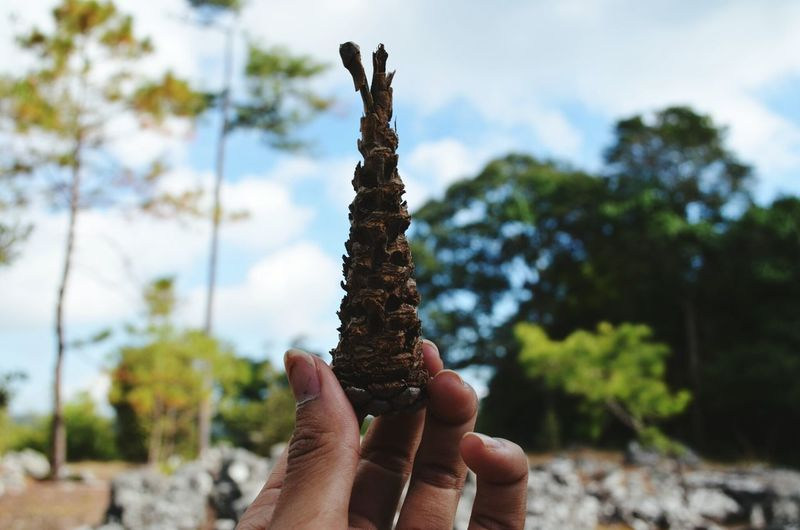 Cropped hand of woman holding pine cone against sky